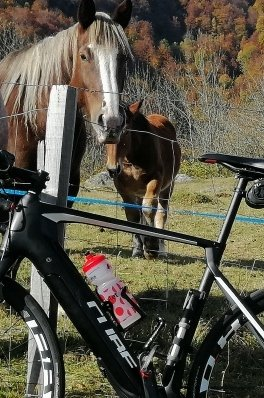 Electric road bike and horses on the road to Luz Ardiden